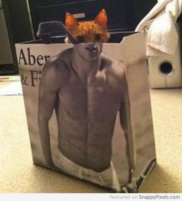 abercrombie-cat-in-bag (8)