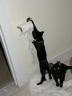 cats-suck-pictures-12