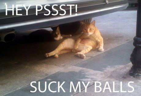 cats-suck-pictures-20