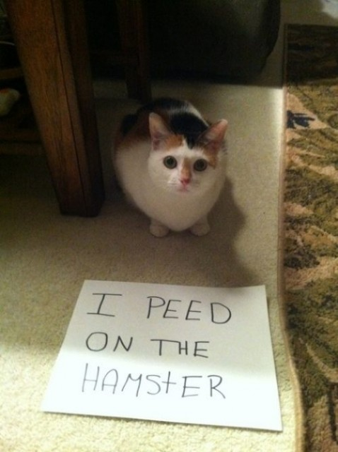 cats-suck-pictures-23