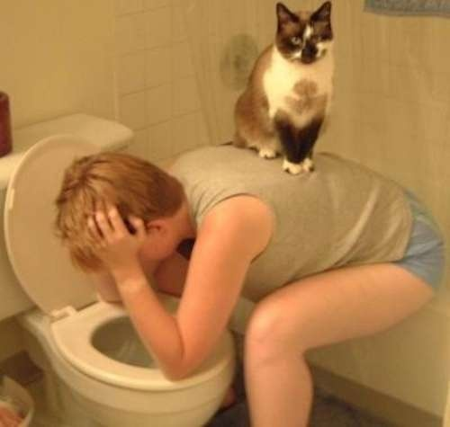 cats-suck-pictures-7