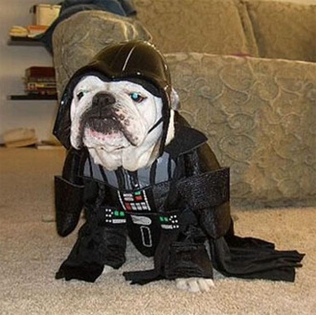 dog-darth-vader-costume (3)