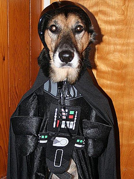 dog-darth-vader-costume (5)
