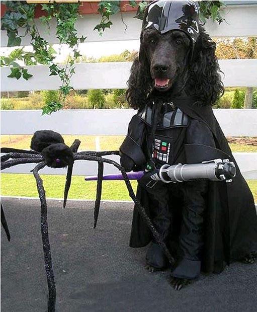 dog-darth-vader-costume (6)