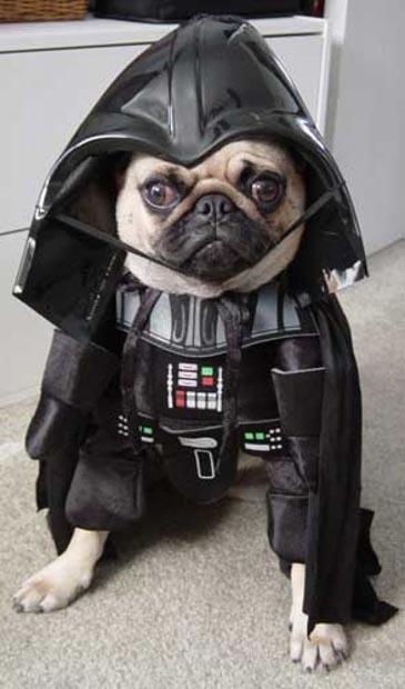 dog-darth-vader-costume (7)