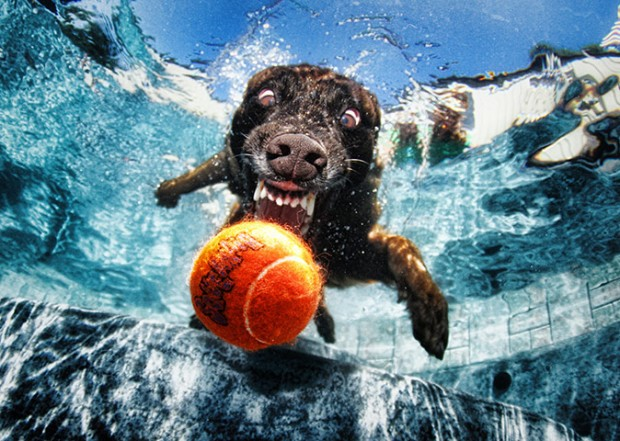 dog-diving-under-water (11)