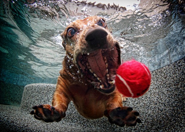 dog-diving-under-water (13)