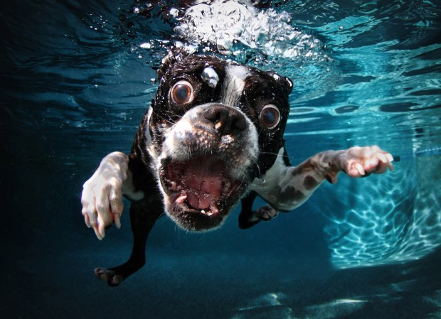 dog-diving-under-water (18)