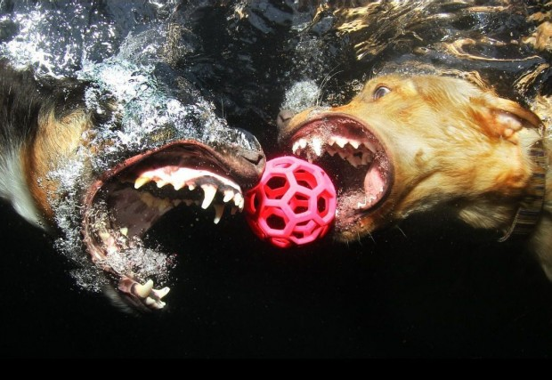 dog-diving-under-water (2)
