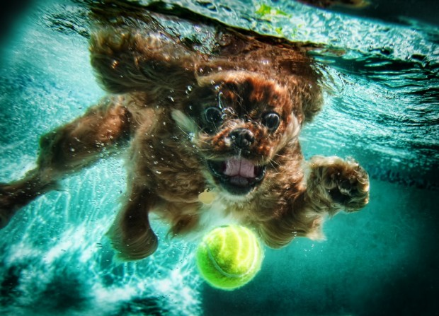 dog-diving-under-water (20)