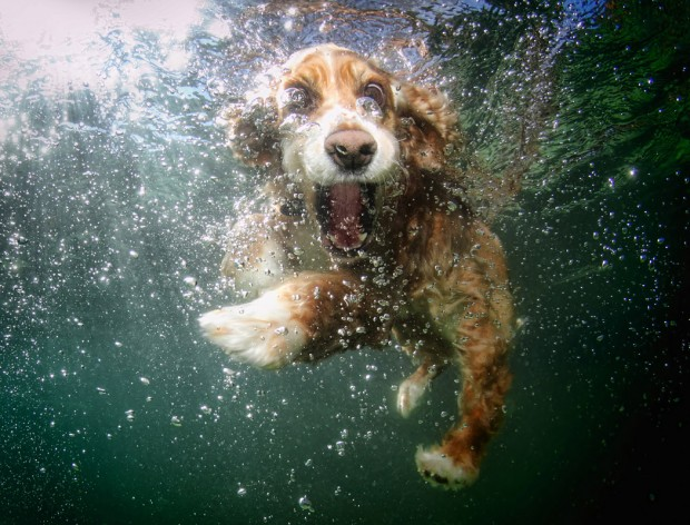 dog-diving-under-water (21)