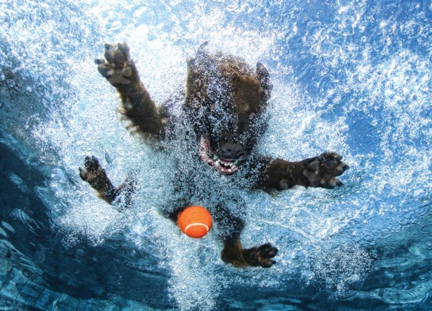 dog-diving-under-water (24)