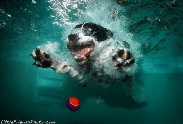 dog-diving-under-water (3)