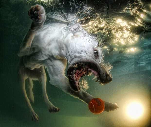 dog-diving-under-water (5)