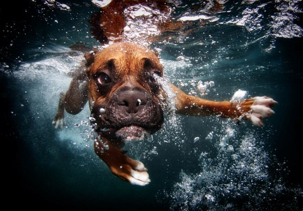 dog-diving-under-water (8)