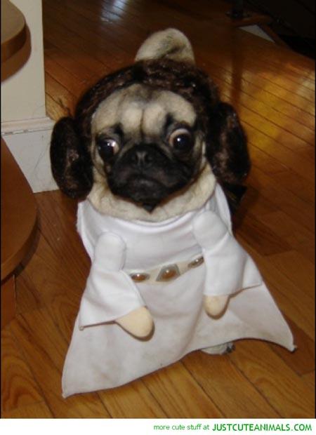 dog-star-wars-costume (1)