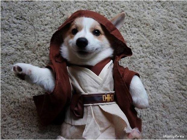 dog-star-wars-costume (12)