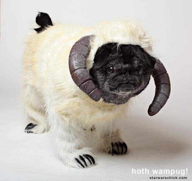 dog-star-wars-costume (15)