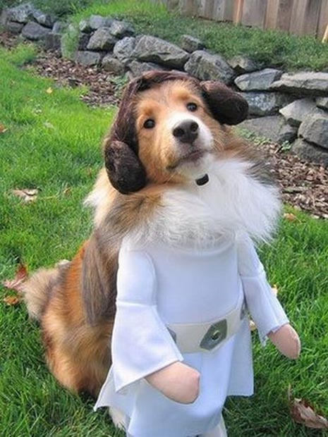 Dogs in Star Wars Costumes (Darth Vader, Yoda, Ewok) – 29 Pictures