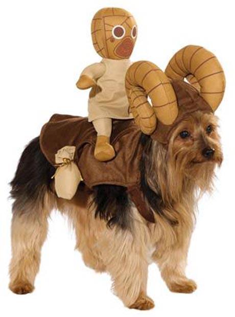 dog-star-wars-costume (7)