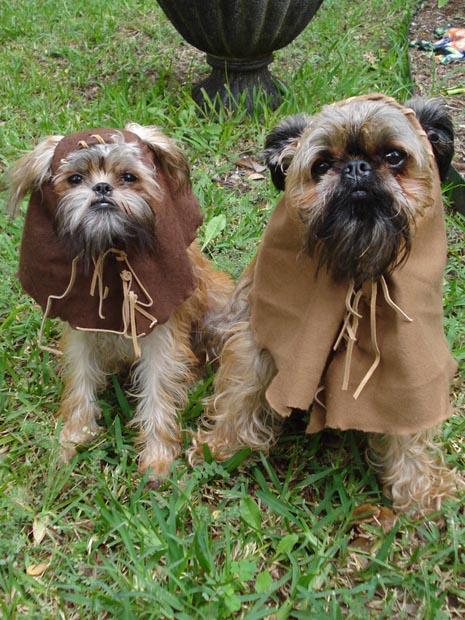 dog-star-wars-ewok-costume (6)