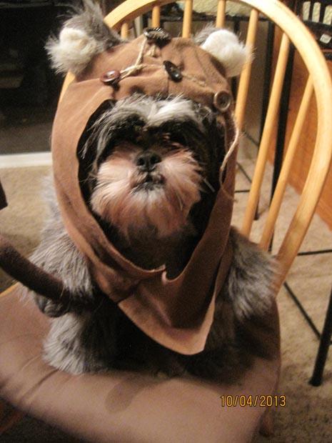 dog-star-wars-ewok-costume (8)