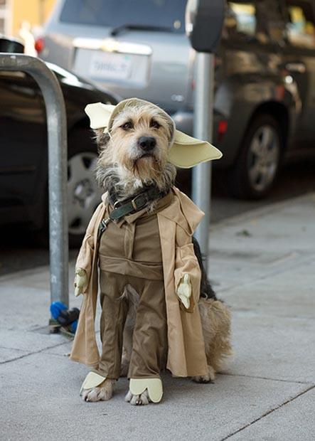 dog-yoda-costume-star-wars (2)