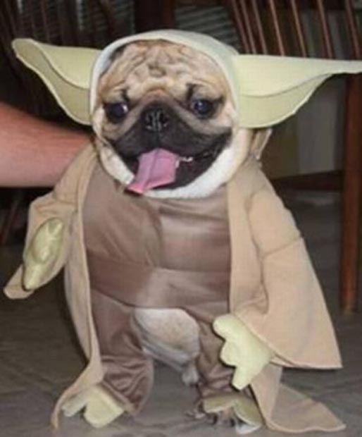dog-yoda-costume-star-wars (5)