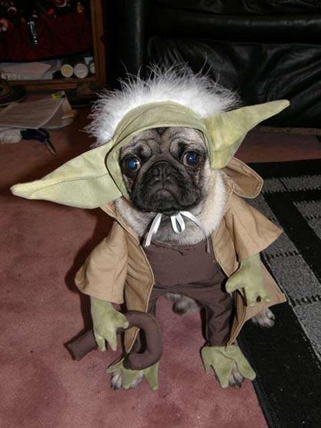 dog-yoda-costume-star-wars (6)