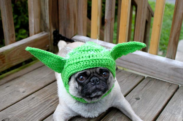 dog-yoda-costume-star-wars (7)