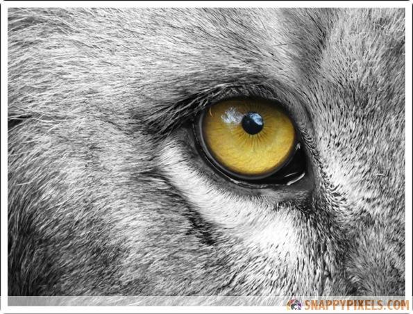 amazing-animal-eye-pictures-001