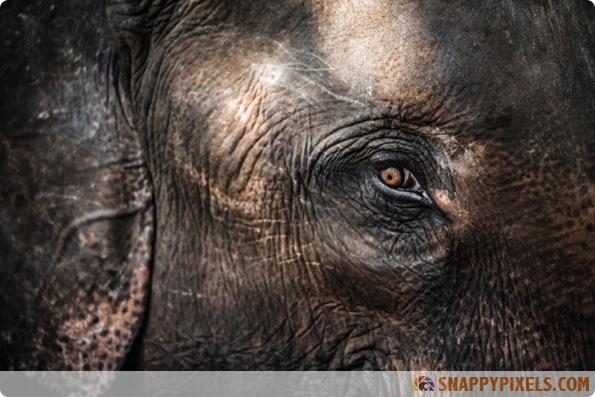 amazing-animal-eye-pictures-02