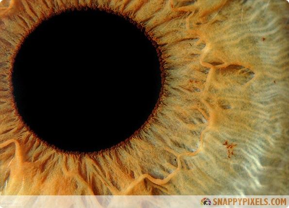 amazing-animal-eye-pictures-04