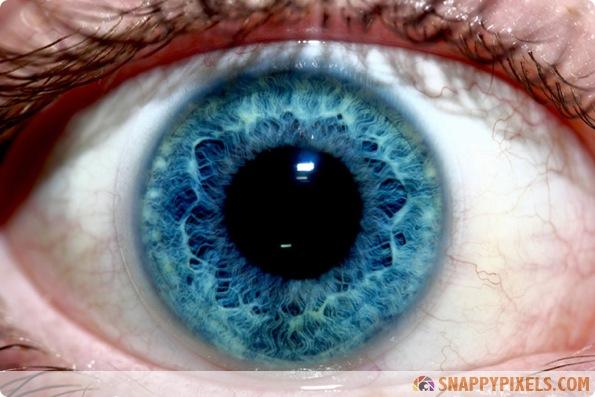 amazing-animal-eye-pictures-08