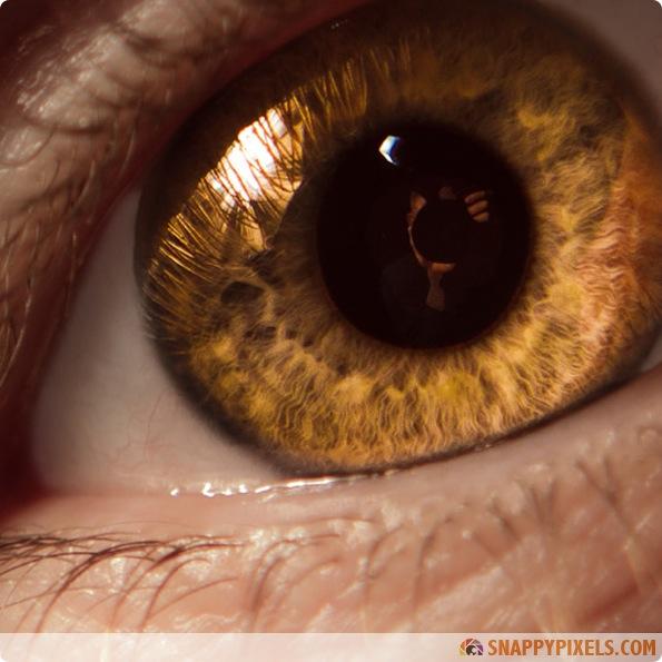 amazing-animal-eye-pictures-10