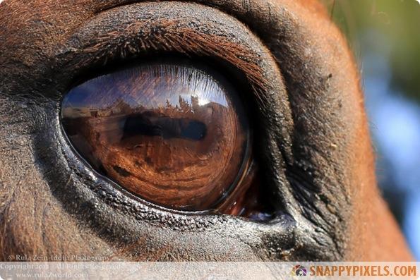 amazing-animal-eye-pictures-11