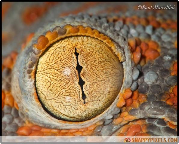 amazing-animal-eye-pictures-13