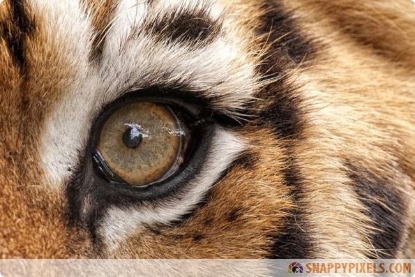 amazing-animal-eye-pictures-15