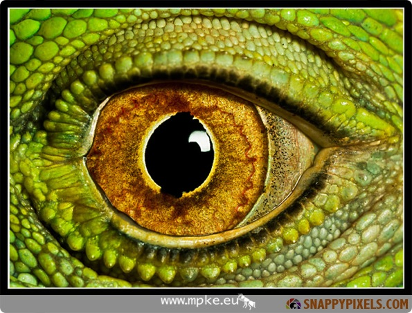 Amazing Closeup Pictures of Animals Eyes