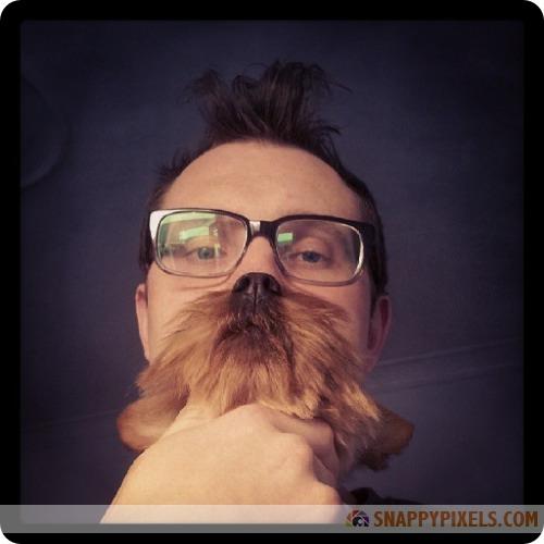 attractive-dog-beards-4