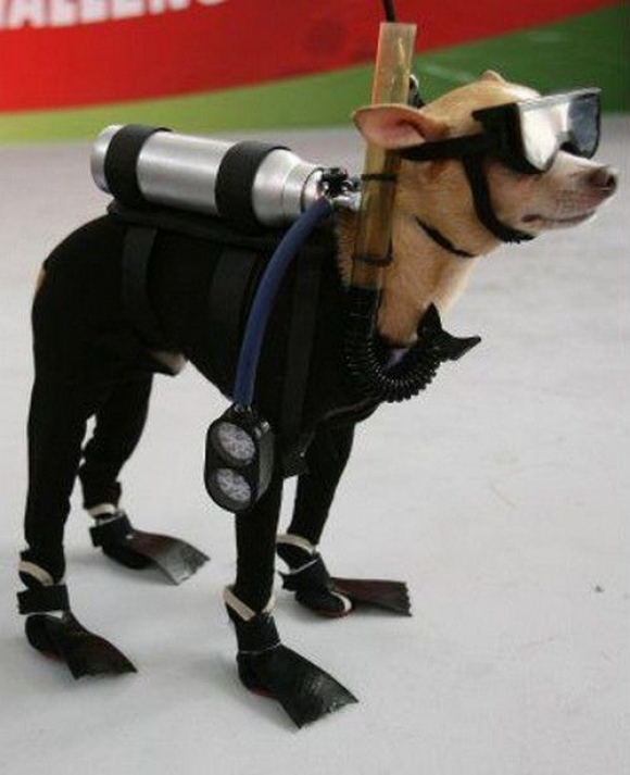 Fun, Crazy Dog Halloween Costumes