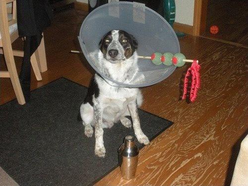 dogcost35