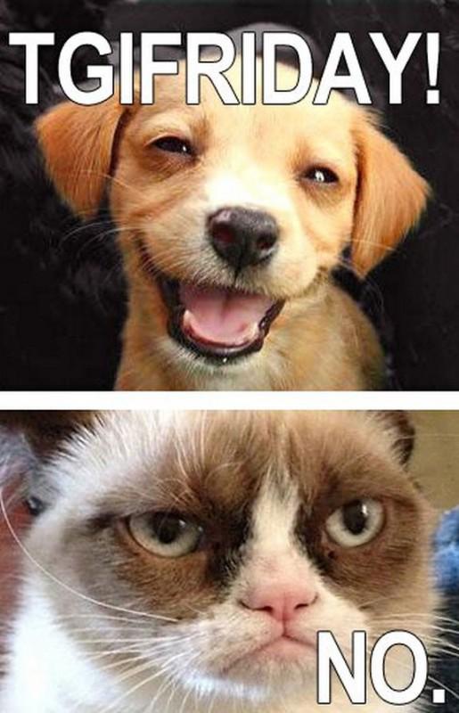 grumpy-cat-meme-sadden-your-day (36)