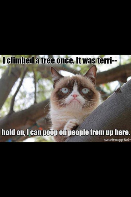 grumpy-cat-meme-sadden-your-day (37)