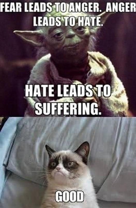 grumpy-cat-meme-sadden-your-day (38)