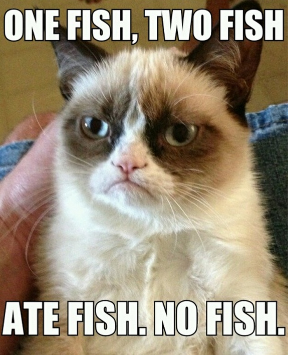 grumpy-cat-meme-sadden-your-day (7)