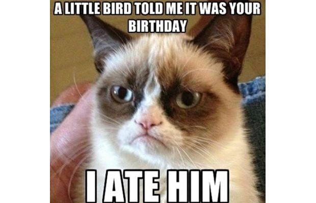 great-grumpy-cat-memes-10