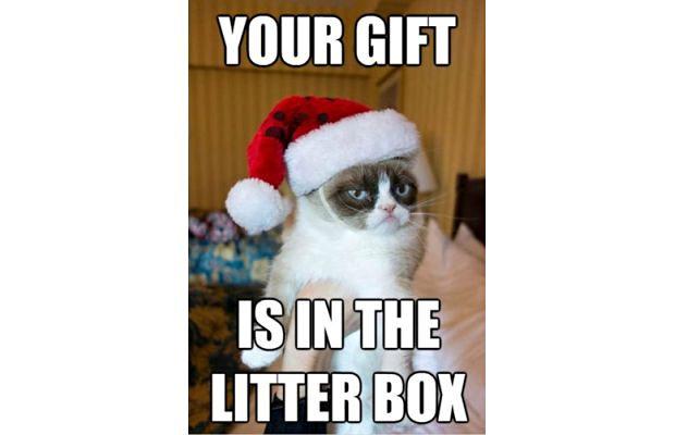 great-grumpy-cat-memes-15