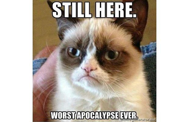 great-grumpy-cat-memes-16
