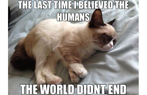 great-grumpy-cat-memes-17